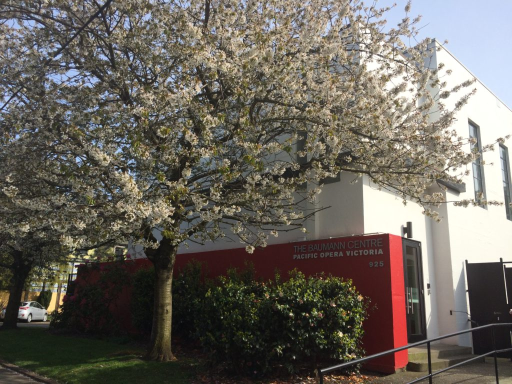 A large tree in bloom stands in front of the red wall marking the entrence of the Baumann Centre.